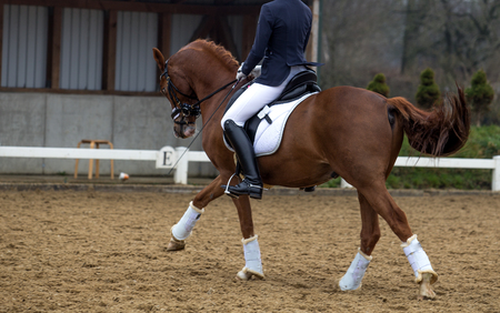 Head of dressage horse on natural background