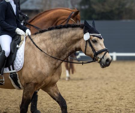 horse in a sport tournament