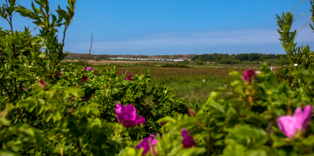 Sylt Island. view of the sand dunes Stock Photo