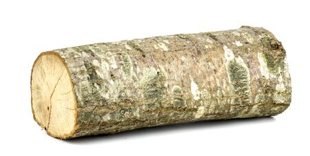 Wooden obsolete log Isolated on a white