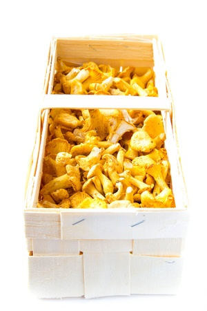 Fresh, raw chanterelles in basket, great autumn  harvest Stock Photo - 20560617