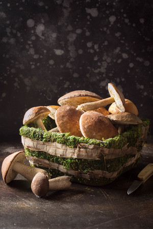Forest mushrooms in basket with moss, autumn harvest, boletus, white and aspen. Raw fresh mushrooms on a dark background