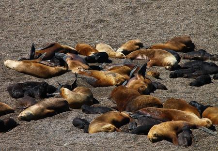 Seals Sleeping Stock Photo