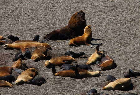 Sea-dog and Seal