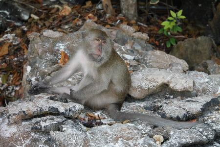 Monkey - Thailand