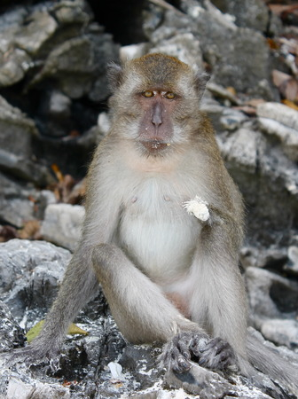 Monkey Looking at you