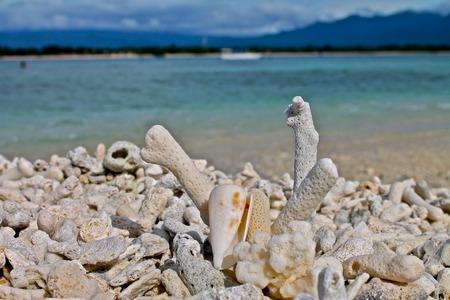 Corals in Gili Trawangan