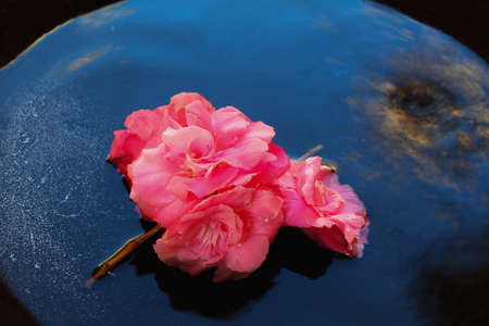 Fuchsia flower branch lying on the water. In the background illusory terrestrial globe.