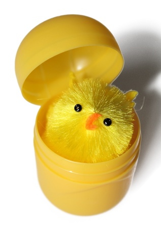 A baby chicken inside an egg shell on a white background Stock Photo
