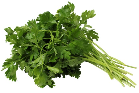 Cilantro tied in a bunch with twine, isolated on white
