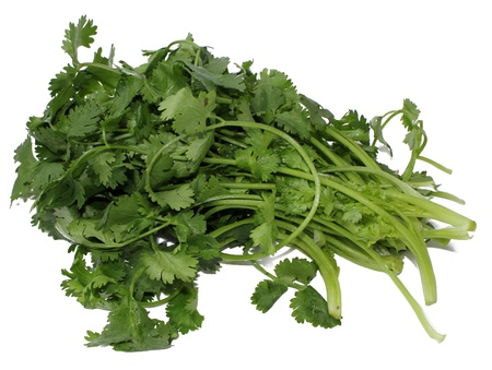 Cilantro tied in a bunch with twine, isolated  on a white background Stock Photo
