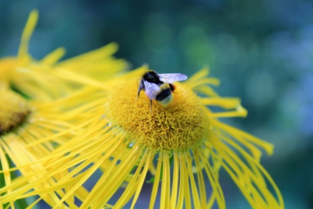 Bee collecting nectar from flowers Stock Photo