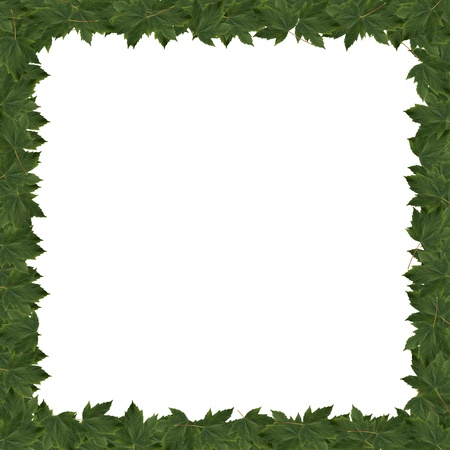 Frame green leaves isolated  on a white background Stock Photo