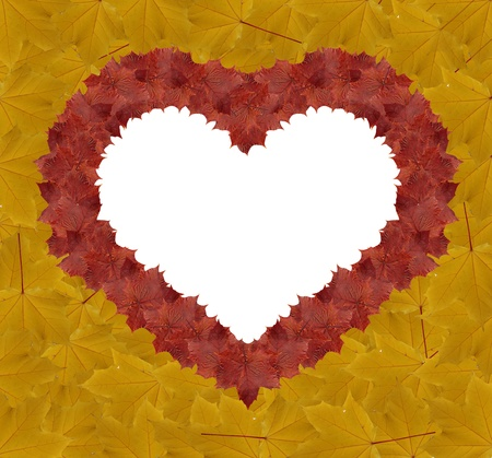 heart shape made by maple autumn leaves photo