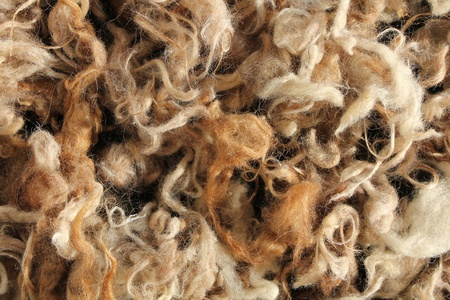 Wool mutton natural brown colour Stock Photo
