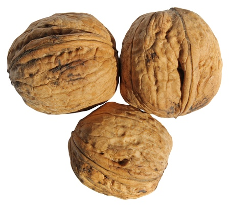 Walnut isolated on a white background photo