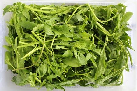 Cress salad, vegetarian food