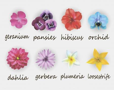 ガーベラ、ゼラニウム、ハイビスカス、蘭、ダリア、プルメリア、オカトラノオを含む花セットのイラスト 写真素材 - 22478932