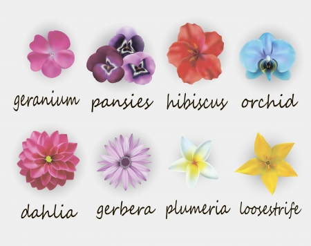 illustration of floral set, including gerbera, geranium, hibiscus, orchid, dahlia, plumeria and loosestrife,
