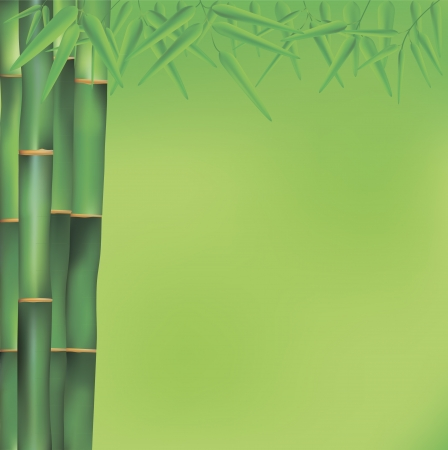vector illustration of bamboo tree decoration Vector