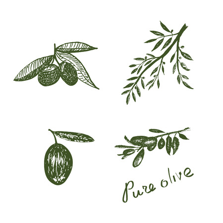 oil crops: Handdrawn olive elements in vector. Pure olive.