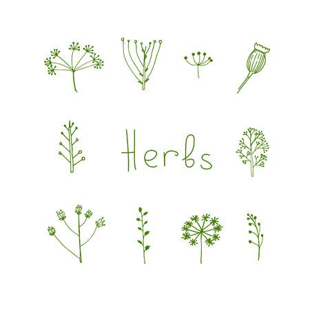 handdrawn: Handdrawn herbal elements in vector Illustration