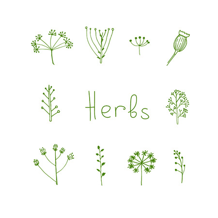 Handdrawn herbal elements in vector Illustration
