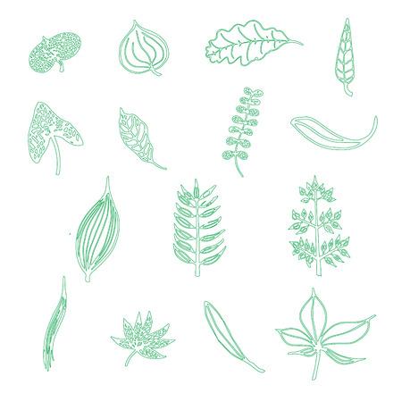 handdrawn: Handdrawn leaf elements in vector Illustration