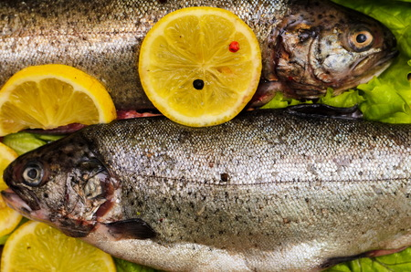 gutted: Raw rainbow trout fish on natural black stone background with salad and lemon Stock Photo