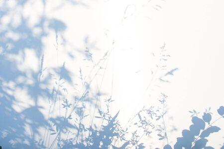 Fondo grigio astratto dell'ombra delle foglie naturali su struttura bianca per fondo Archivio Fotografico