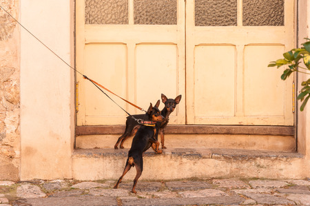 tied: Dogs tied outside a door