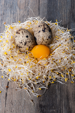 enzymes: Quail eggs on a nest of alfalfa sprouts