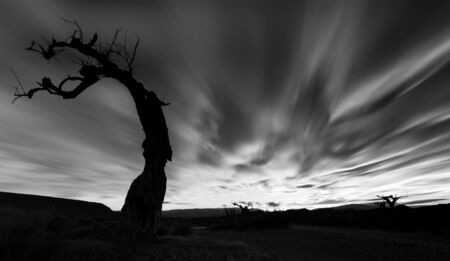 Black and white exposure of the silhouette of a backlit tree in the tavernas desert in Almeria. Stock Photo