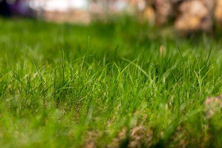 green grass texture. side view. blur background