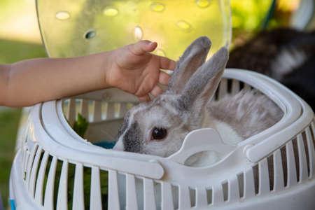baby hand stroking a dwarf decorative rabbit in a carrier