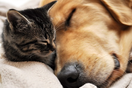 dog cat: animal friendship