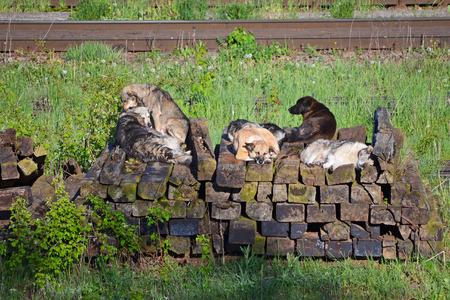 sleepers: Dogs on rail sleepers