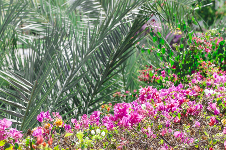 vocation: Beautiful Exotic nature view relax vocation view. Stock Photo