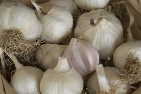 clove plant: Garlic in the backet