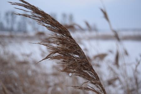 feld: Dry gras on the winter coast