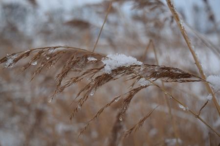 feld: Winter nature, landscape Stock Photo