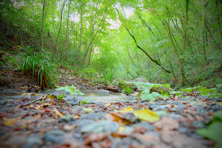 undergrowth: Typical woodland path of Mediterranean undergrowth in Tuscany (shallow DOF)