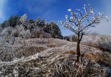 rime on trees and grass photo