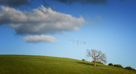 Tree on green field with blue sky and birds Stock Photo
