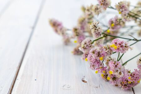 Fresh pink flowers on white wooden background