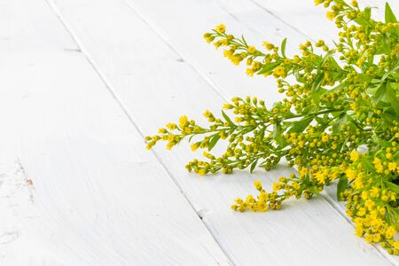 Fresh Green Yellow Flowers on White Wooden Background