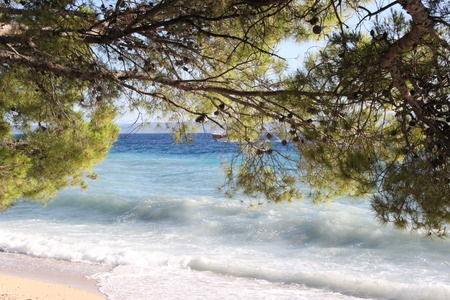pine trees: Pine trees on the beach