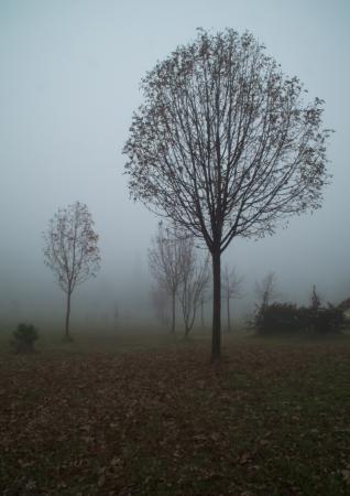 parte: parte di bosco in una giornata di nebbia