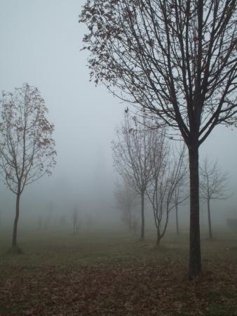 nebbia: sentiero con alberi immerso nella nebbia