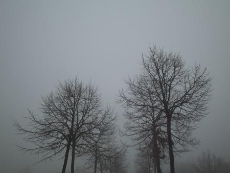 nebbia: cime di alberi su sfondo di cielo grigio con nebbia
